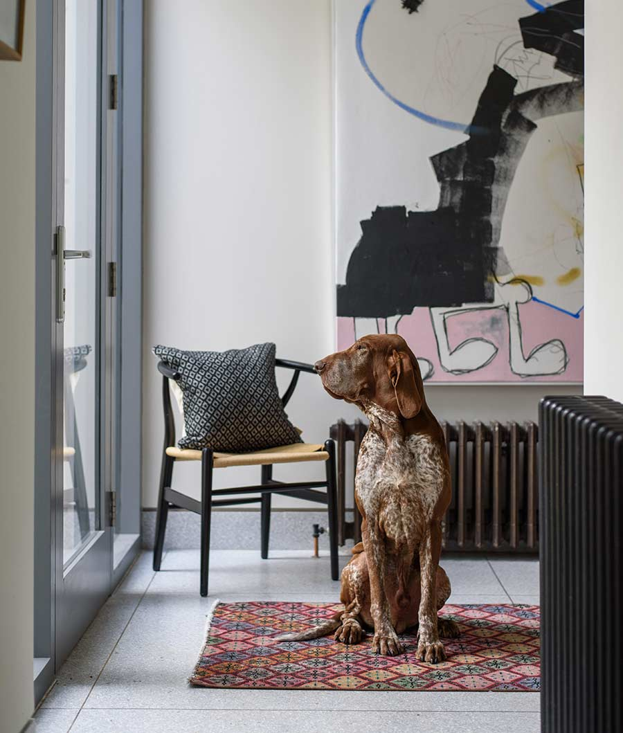 Dog looking out at garden in Belfast townhouse